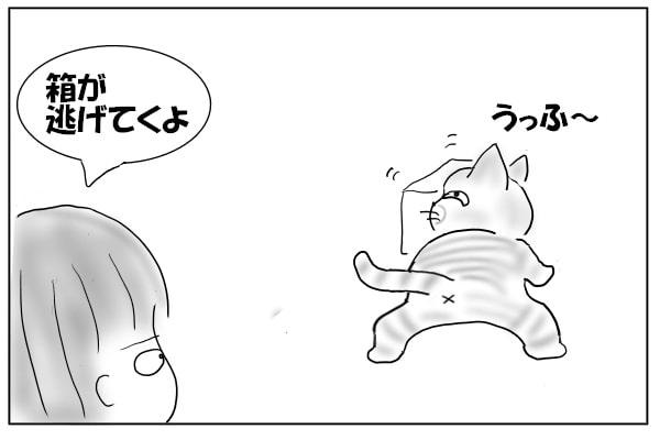 箱を運ぶ猫