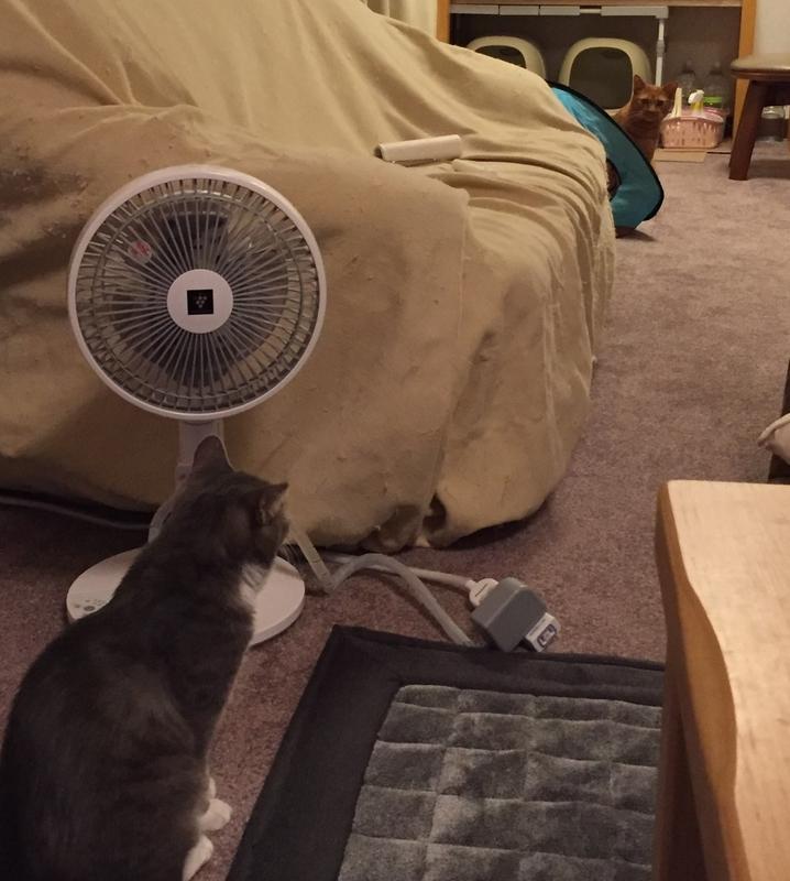 見つめあう猫たち