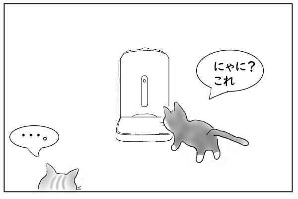 猫の好奇心