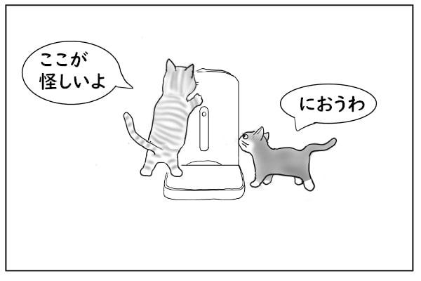 餌さがしする猫