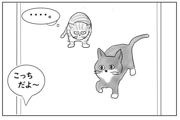 ちかづいてくる猫