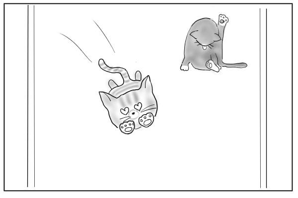 飛んできた猫