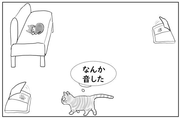 餌に近寄る猫