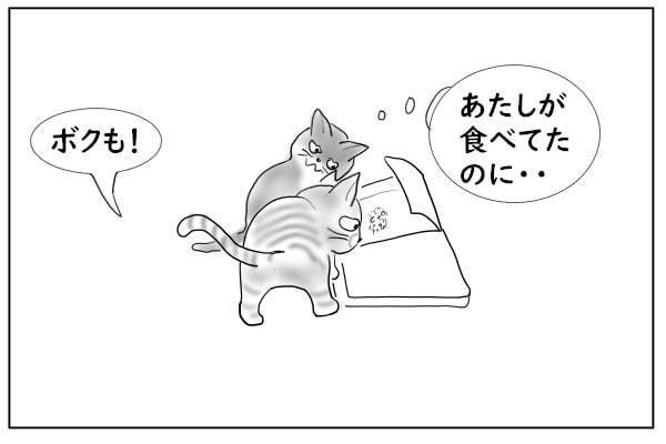 横取りする猫