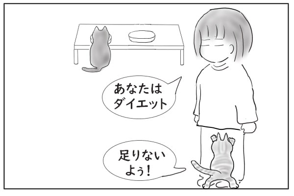 猫のダイエット