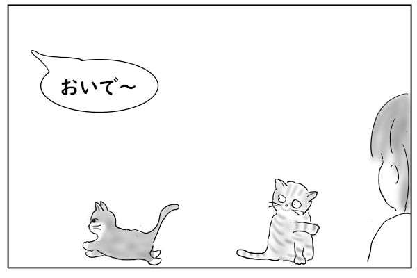 呼ばれた猫