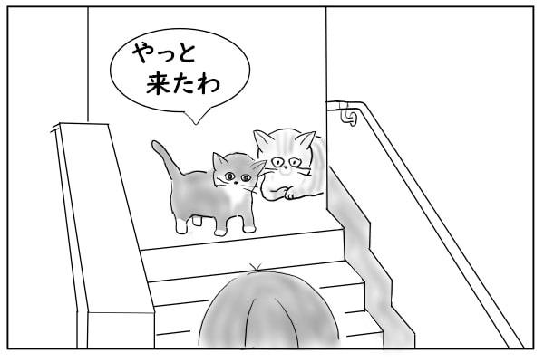 待っていた猫たち