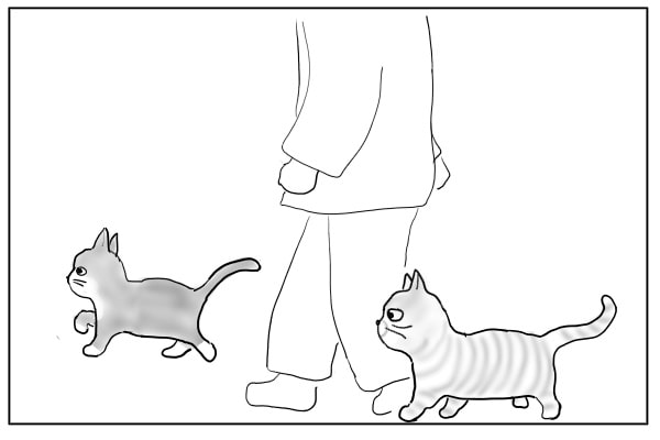 一緒に歩く猫たち