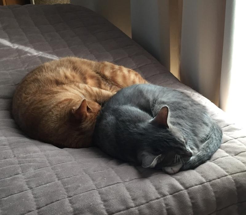 寝る猫たち