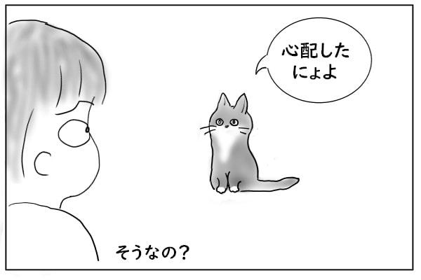 ついてきた猫