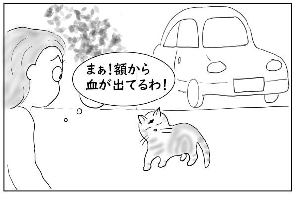 血を流す猫
