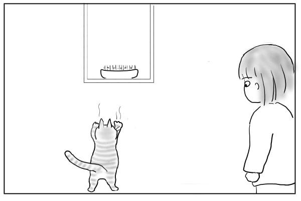 窓辺に突進する猫