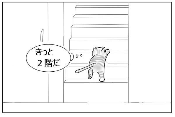 階段を上がる猫