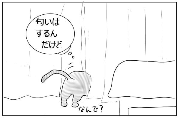 カーテンの裏をさがす猫