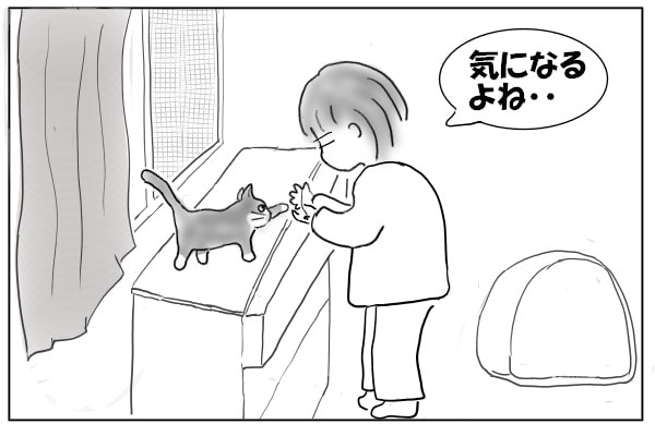 箪笥に上った猫