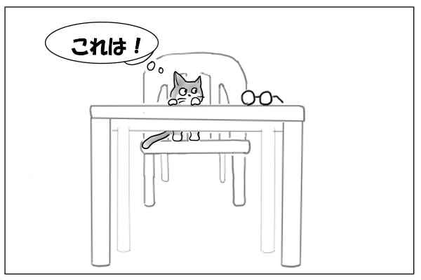 メガネを見つけた猫
