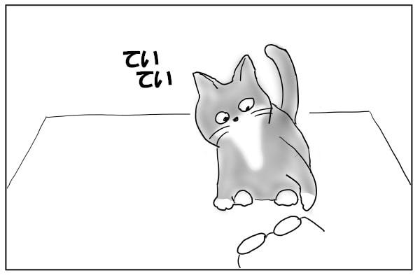 つついて遊ぶ猫