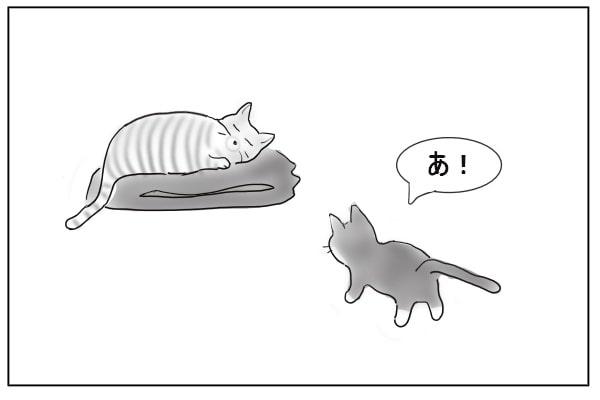 立ち止まる猫