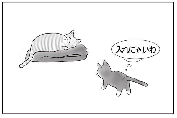 愕然とする猫