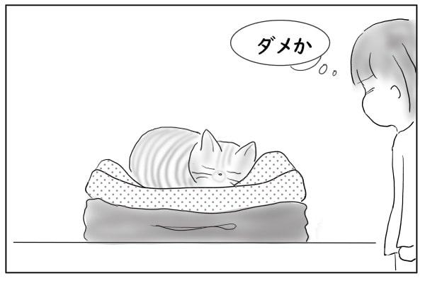 やっぱり潰して乗る猫