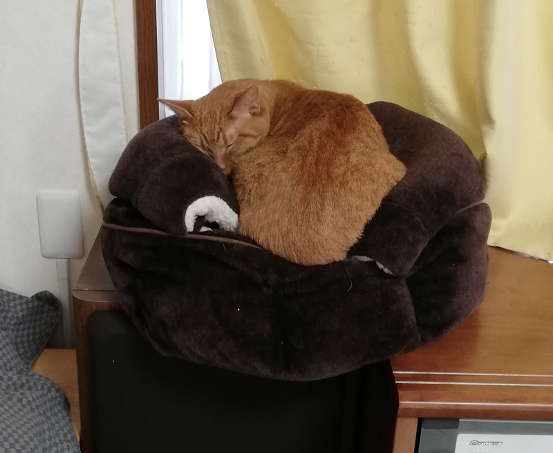 かぼちゃドームに乗る猫