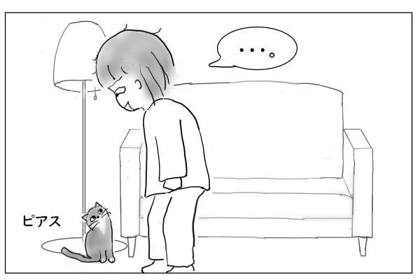 クイズに答える猫
