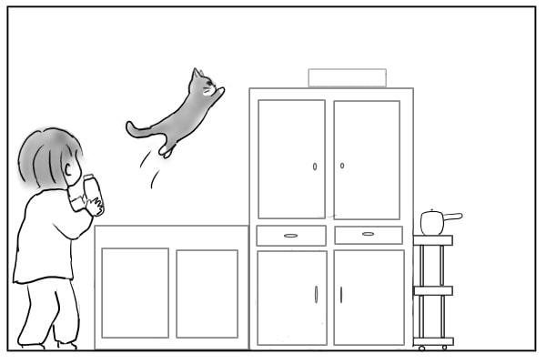 食器棚に飛び乗る猫