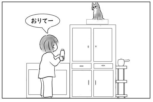 見おろす猫