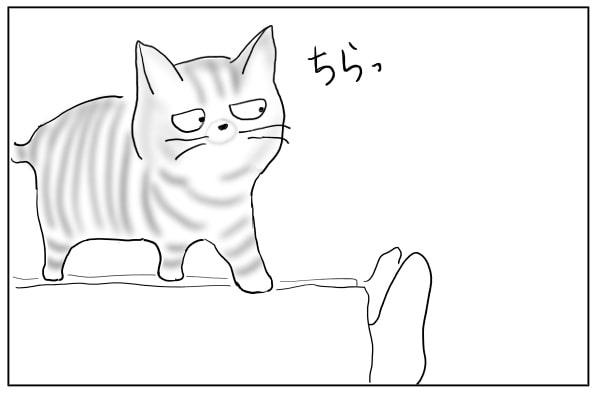 同居猫が気になる