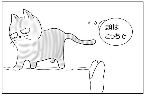 方向転換する猫