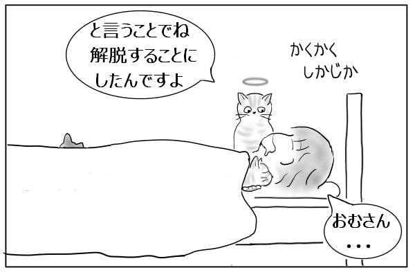報告する猫