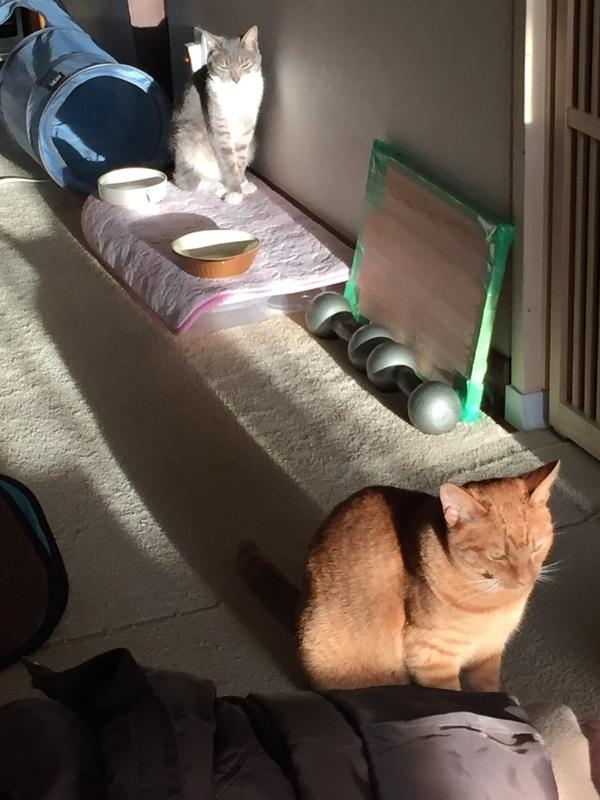 西日に照らされる猫