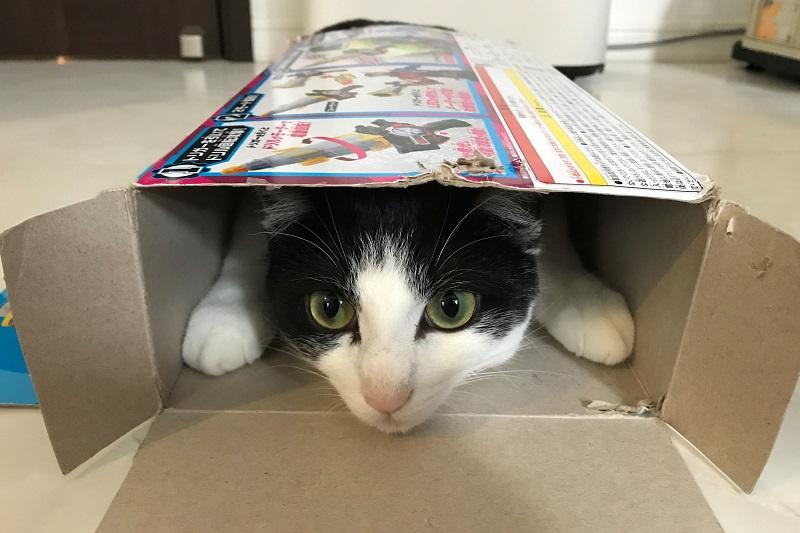 おもちゃの紙箱に入る