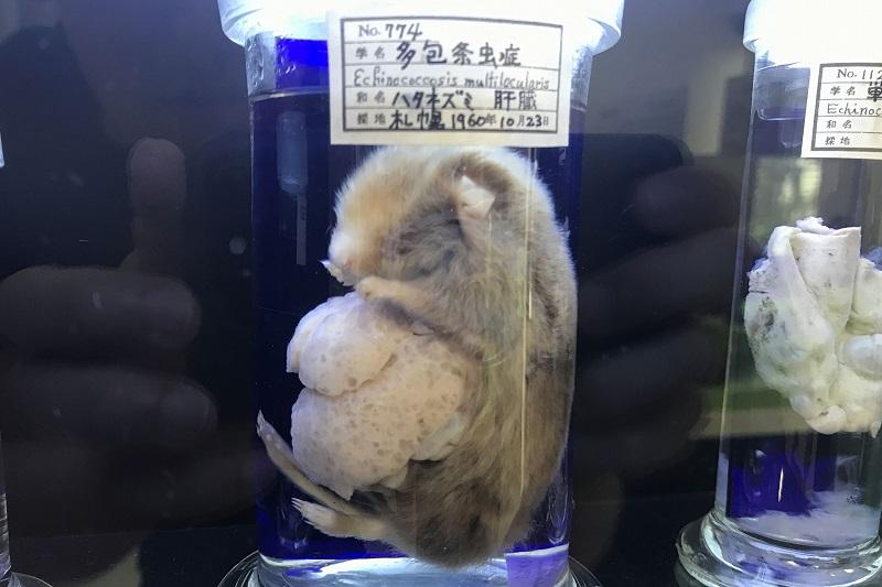 ネズミの多包条虫症