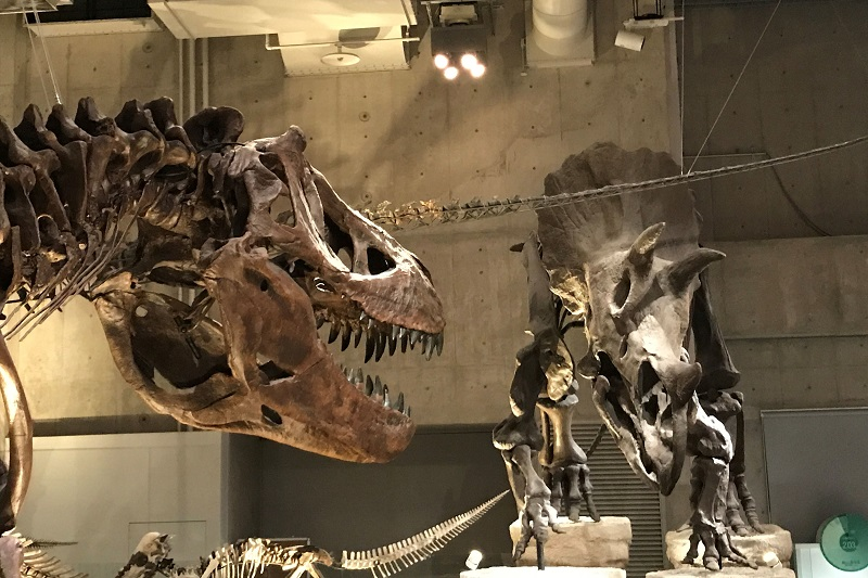 ティラノザウルスVSトリケラトプス