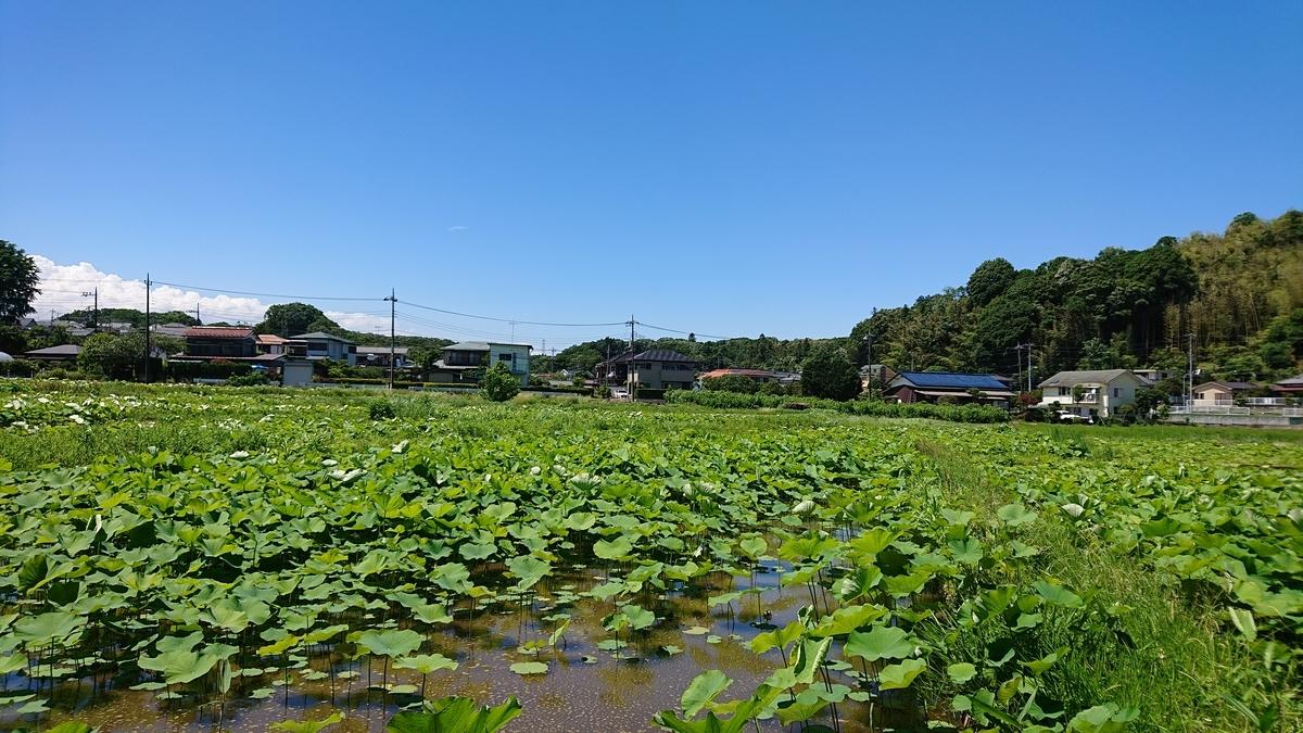 f:id:daigakuimo8:20200827215153j:plain