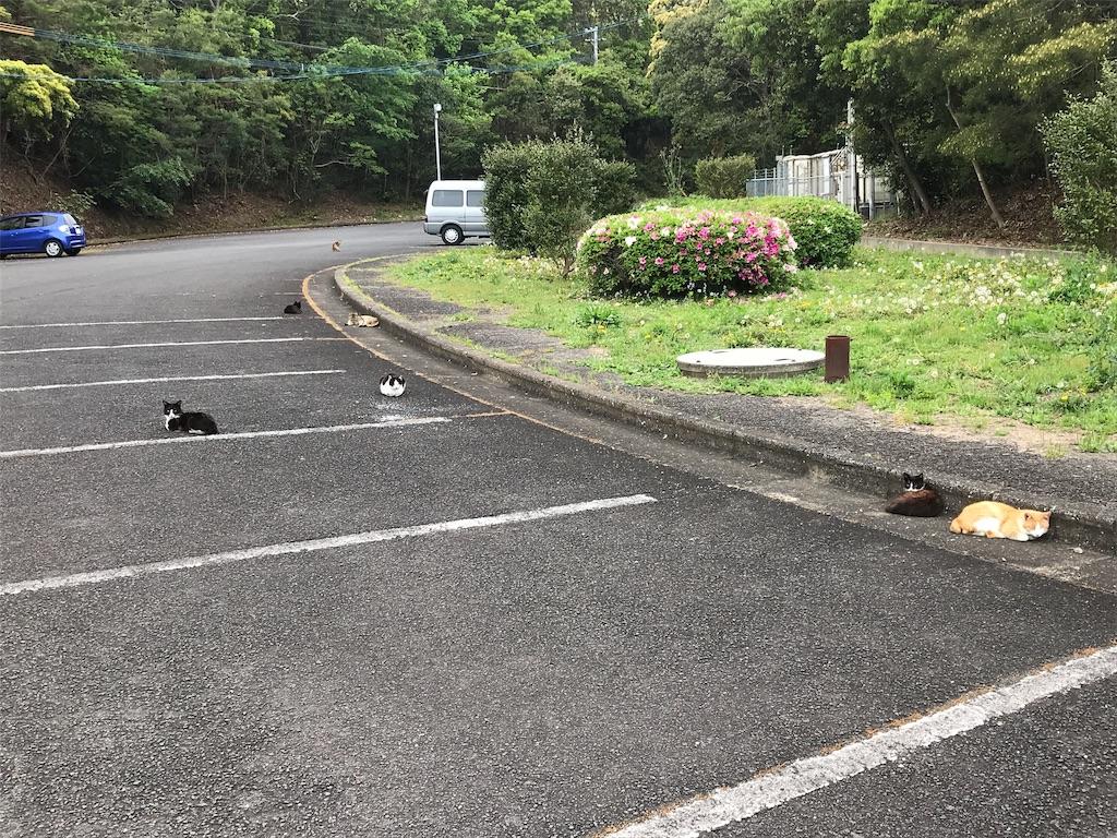 f:id:daigakuseino:20190427012809j:image