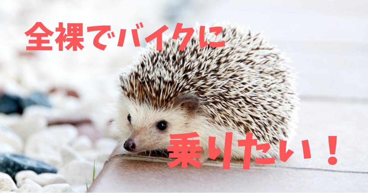 f:id:daigakuseino:20190508150232p:plain