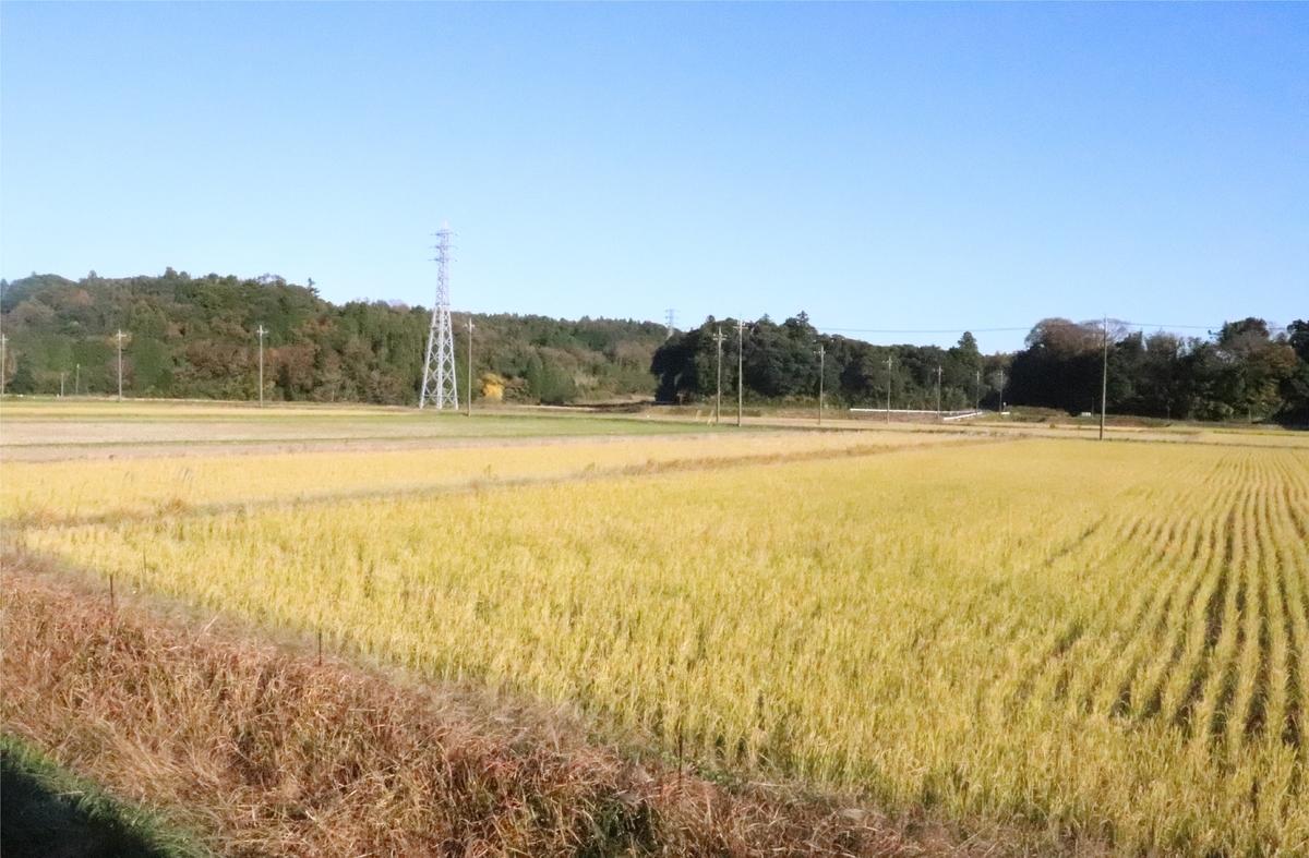 f:id:daihida:20201122135516j:plain