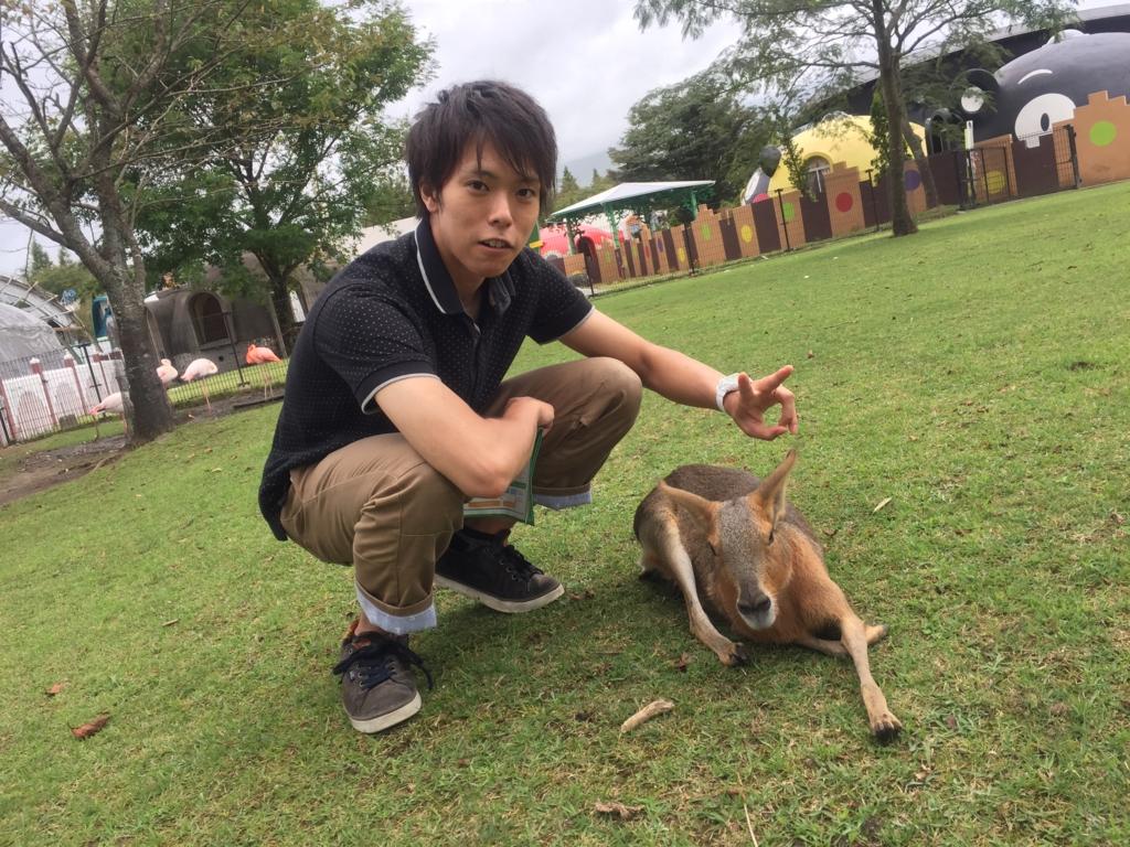 f:id:daikago0114:20160823221619j:plain