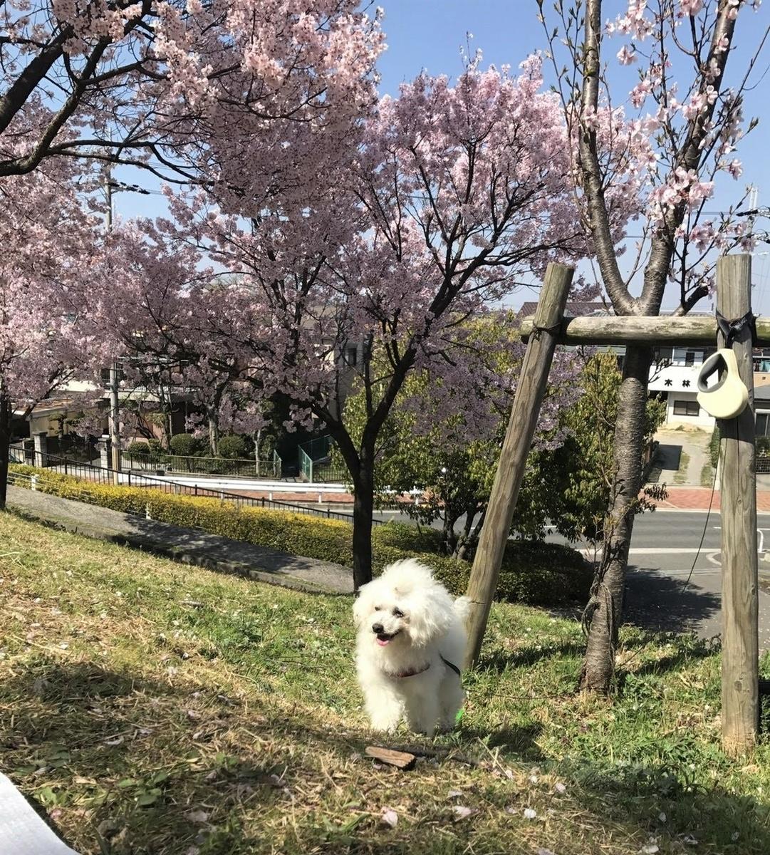 f:id:daiki-em:20190406125046j:plain