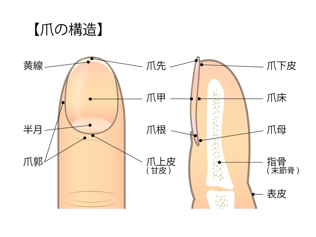 f:id:daiki-em:20190724202229j:plain