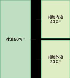 f:id:daiki-em:20190808161901p:plain