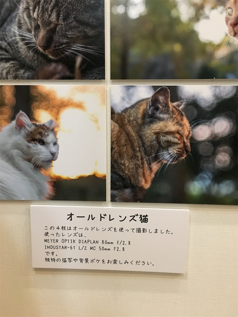 f:id:daiki_bassist:20170220204540j:image