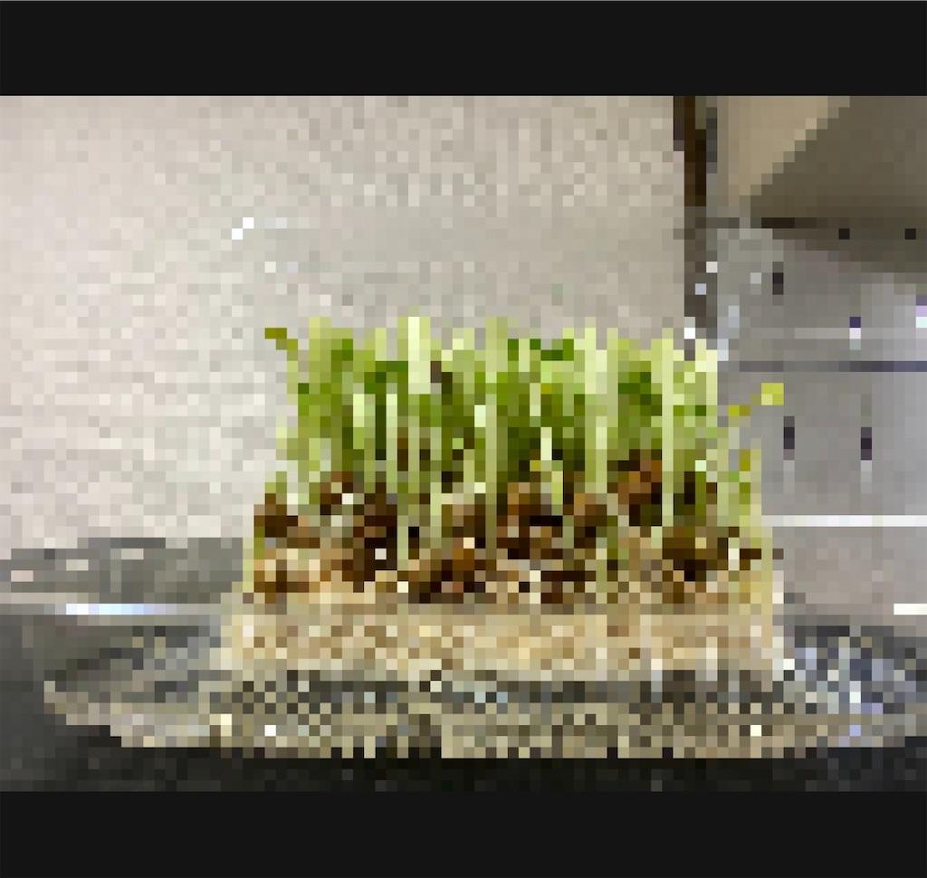 f:id:daiki_futagami:20200326125252j:image