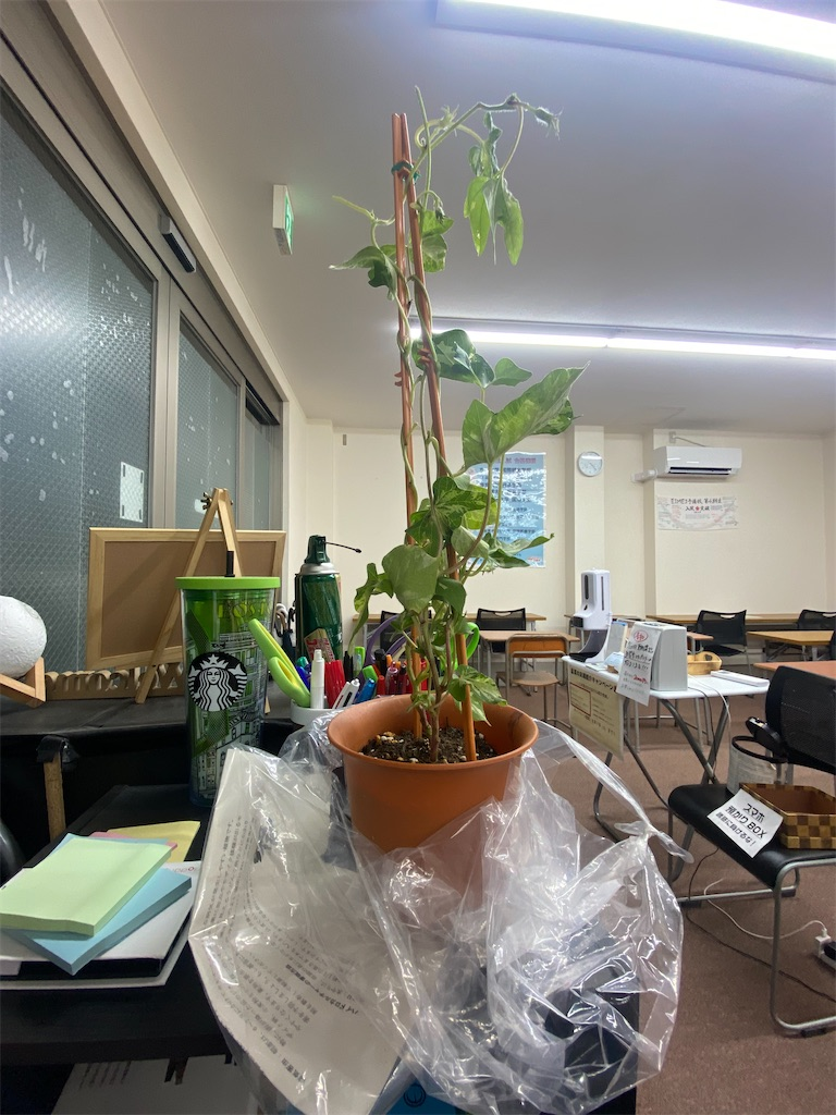 f:id:daiki_futagami:20210716192322j:image