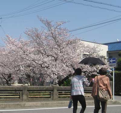 f:id:daikokuya2:20180413174413j:image