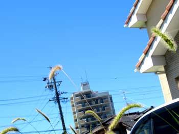 f:id:daikokuya2:20180731140459j:image