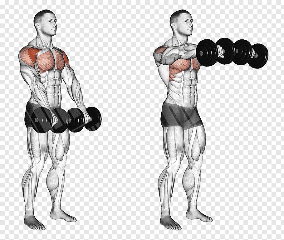 肩トレーニングのフロントレイズをしている男性