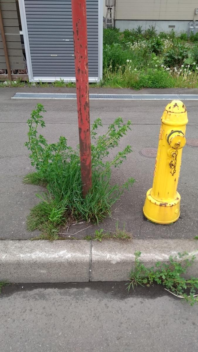 f:id:daiouoka:20210530132735j:plain